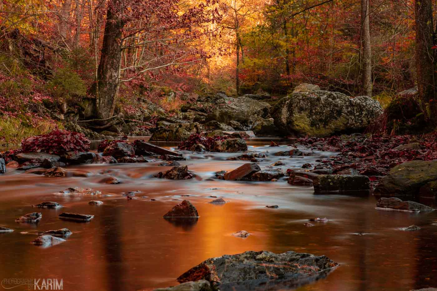 Fall Scapes